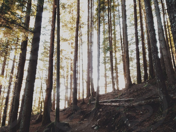 Forests scapes photo