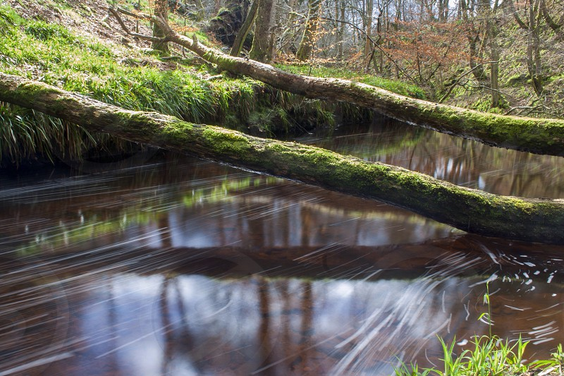 River Tree water reflections photo
