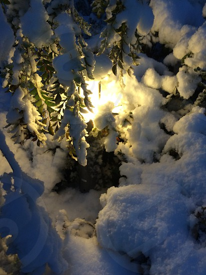 Lamp&SnowTokyo photo