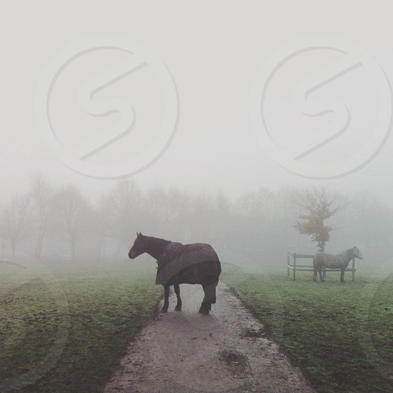Black horse stands across a path acting as a road block with a foggy background. In the near background a white horse stands facing the opposite direction. photo