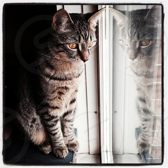 Cat in window with reflection photo