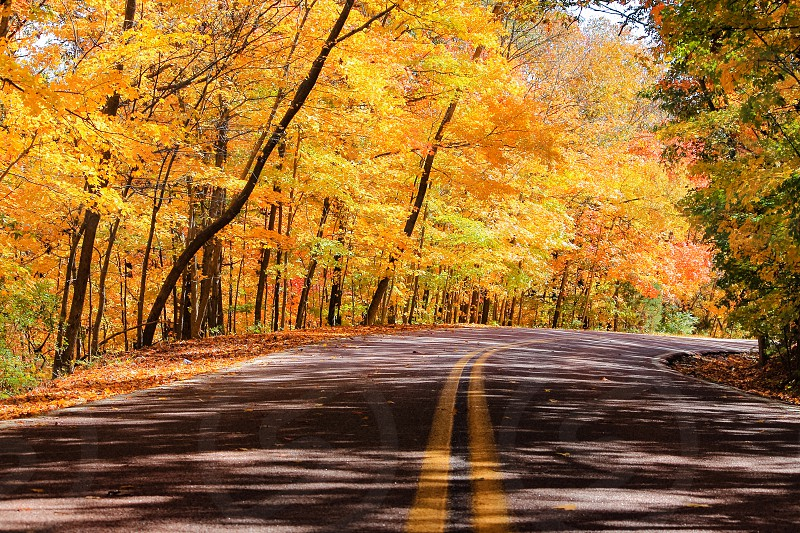 A street with a forest on both sides in autumn during a road trip in USA photo