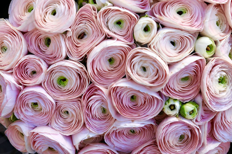Circles circle  flowers bouquet  pink flowers pink color multiple  photo