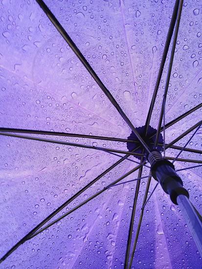 violet umbrella photo