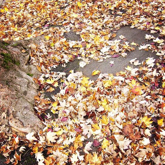 Autumn. Leaves. Fall.  photo