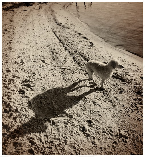 Shadow of a dog on the beach  photo