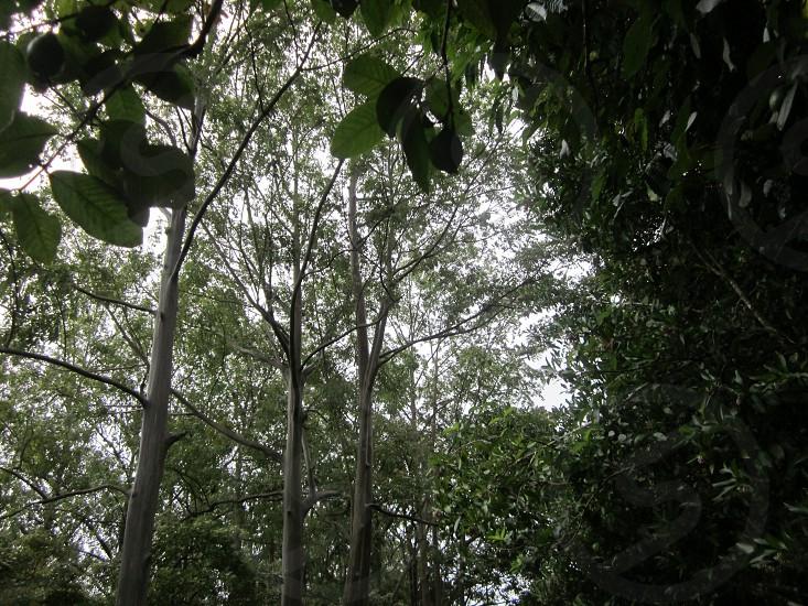Rainforest On the Road to Hana - Maui Hawaii photo