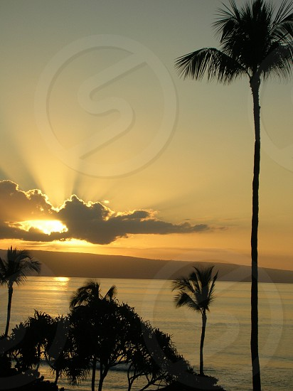 Beautiful Maui sunset romantic scenic view honeymoon golden palm trees sea travel island adventure photo