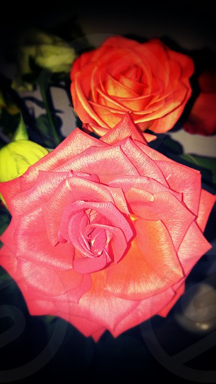 Roses From My Love photo