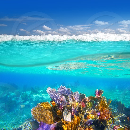 Mayan Riviera coral reef underwater up down waterline Mexico photo