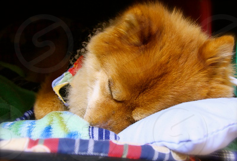 A sleeping / relaxed dog laying on a bed (3) photo