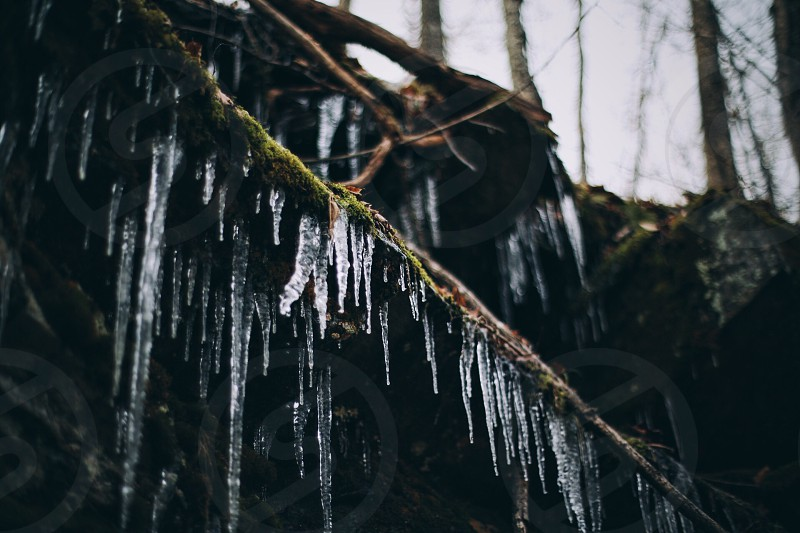 icicles hanging from tree vines photo
