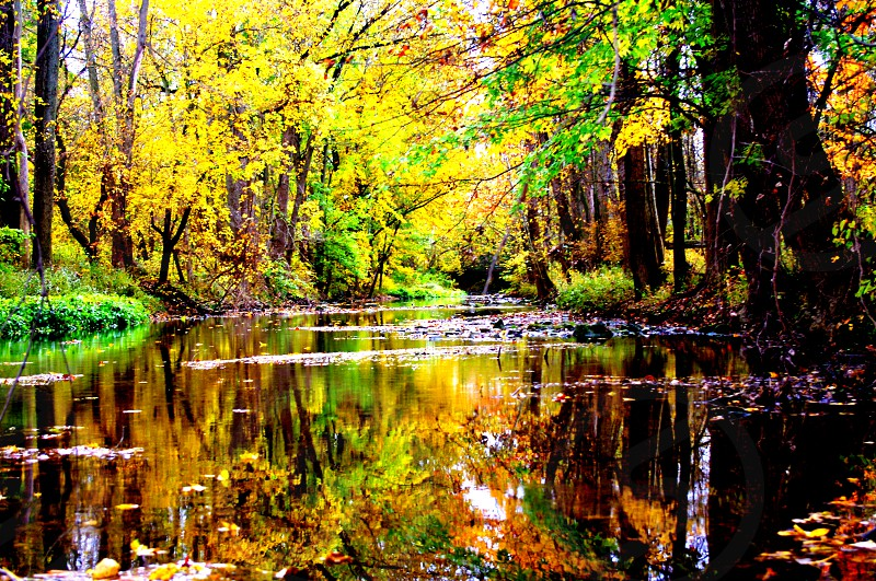 Autumn reflections on the river photo