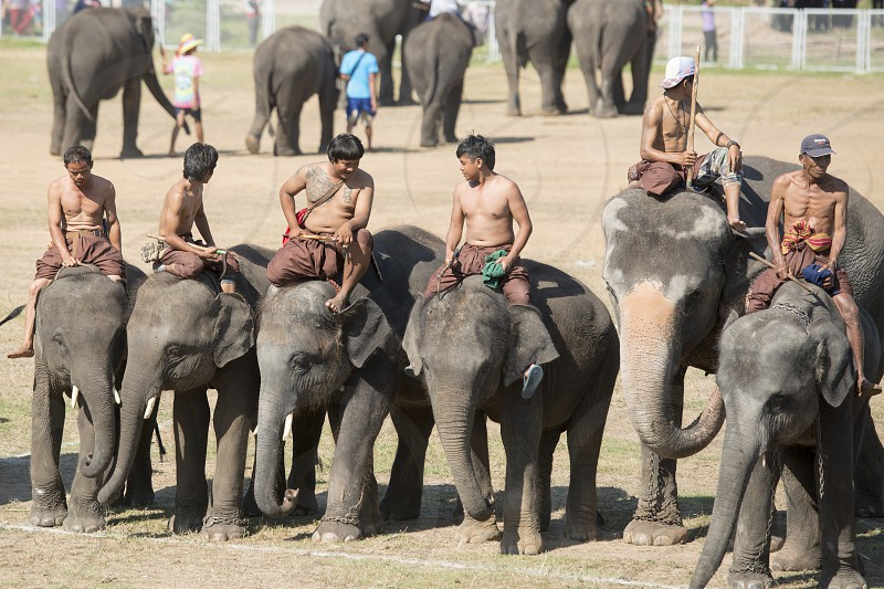 the big Elephant show in the Stadium at the Elephant Round-up Festival in the city of Surin in Northeastern Thailand in Southeastasia.  photo
