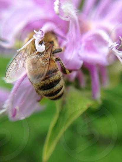 purple flower and bee macro photo