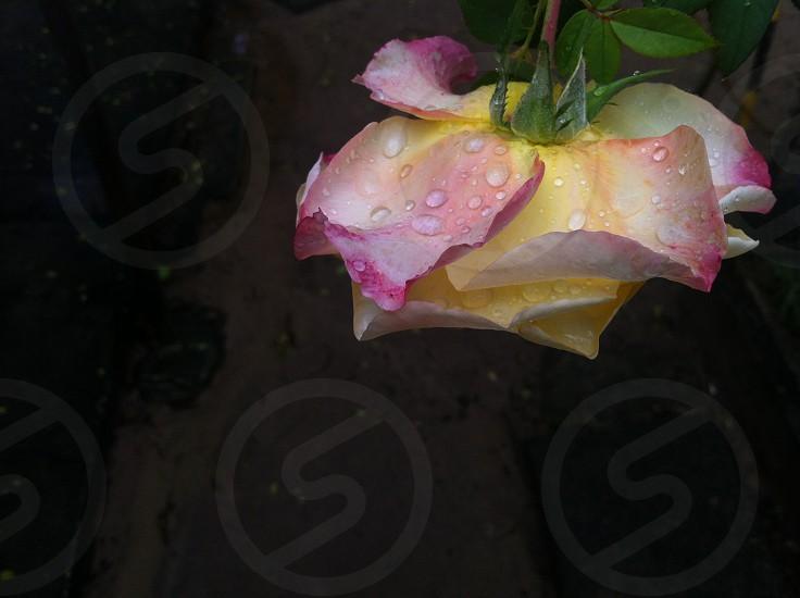 2014 Flower - Salvador Bahia -Brazil photo