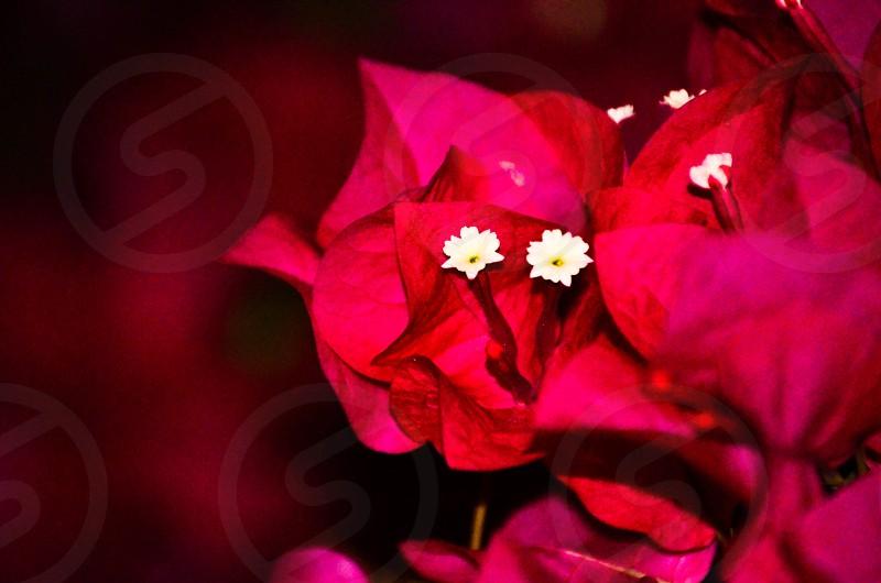 Flower :) photo