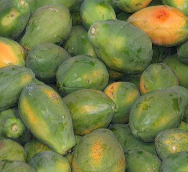 Papayas crop being harvested in Brazil. photo