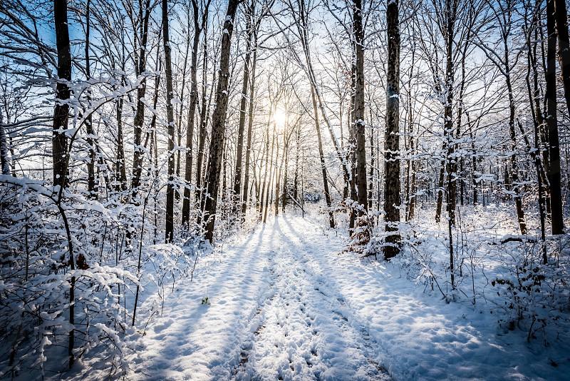 Snowy path with sun glare in Englewood Ohio. photo