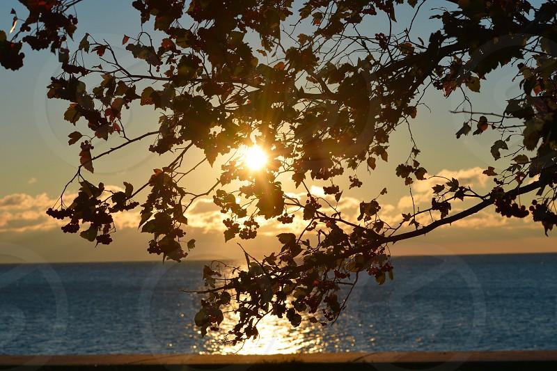 Sunrise trees leaves photo
