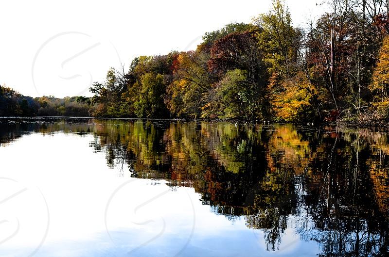 Tress reflected on lake photo