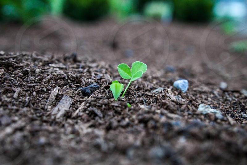Seeding planting ground sprouting  photo