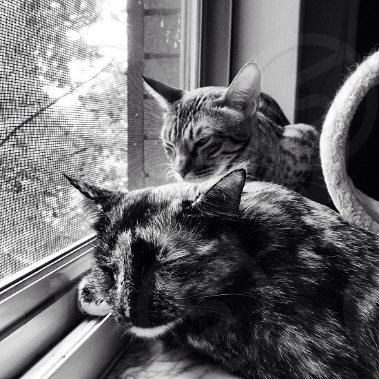 The kitties content on the window sill.  photo