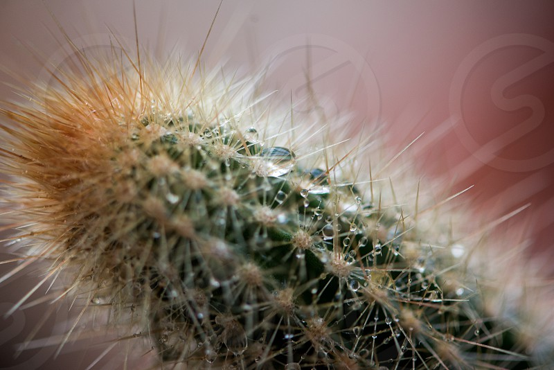 Close-up of a cactus on a rainy day photo