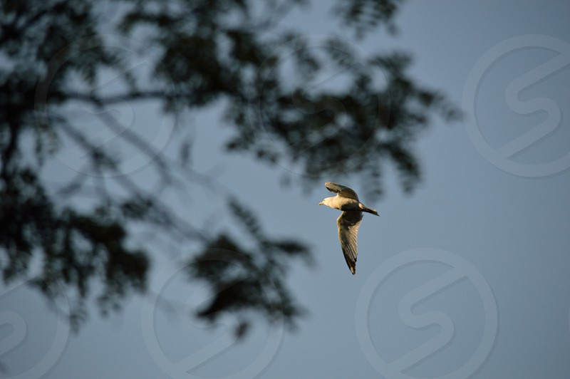 brown and white bird soaring photo