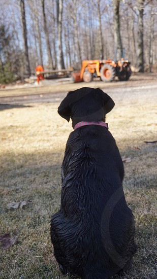 Dog orange blacktractor photo