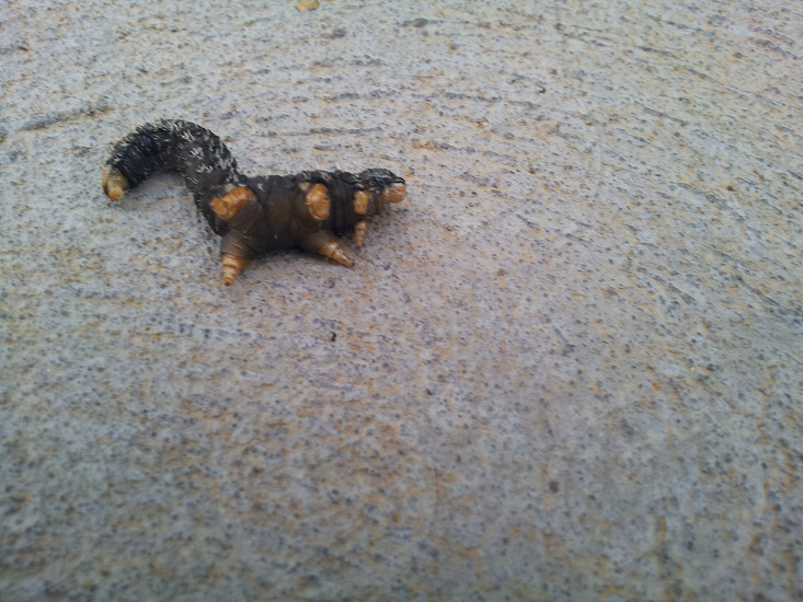 slug resting ant caterpiler photo