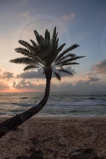 Hawaii Oahu Sunset beach  photo