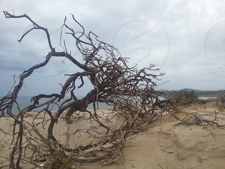 Wild Sardinia photo