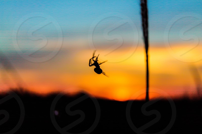 dangling small spider photo