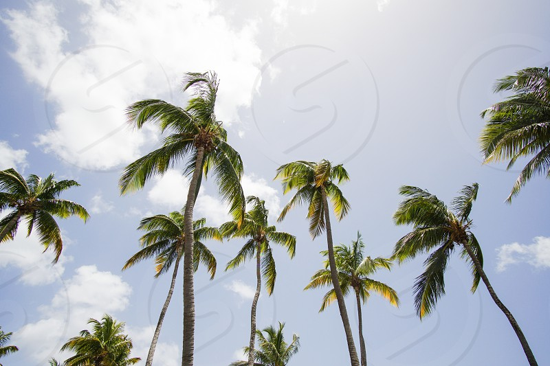 palms palm tree tropical sun summer clouds sky vacation sunny photo