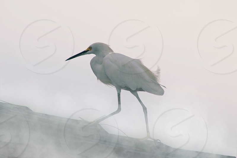 Egret in the fog natureamazingbeautybeautifulbirdstravelanimals photo