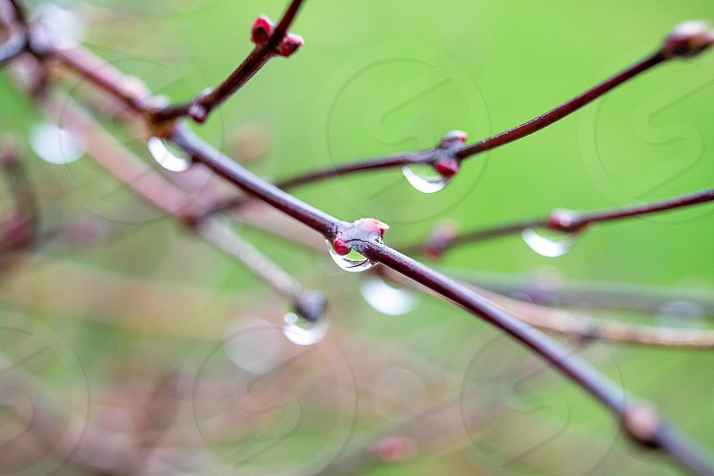 Nature rain tree branch Woods raindrop green photo
