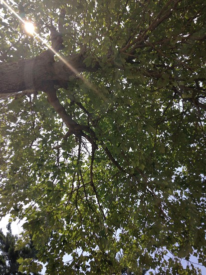Lazing under a tree in the summer sunshine photo