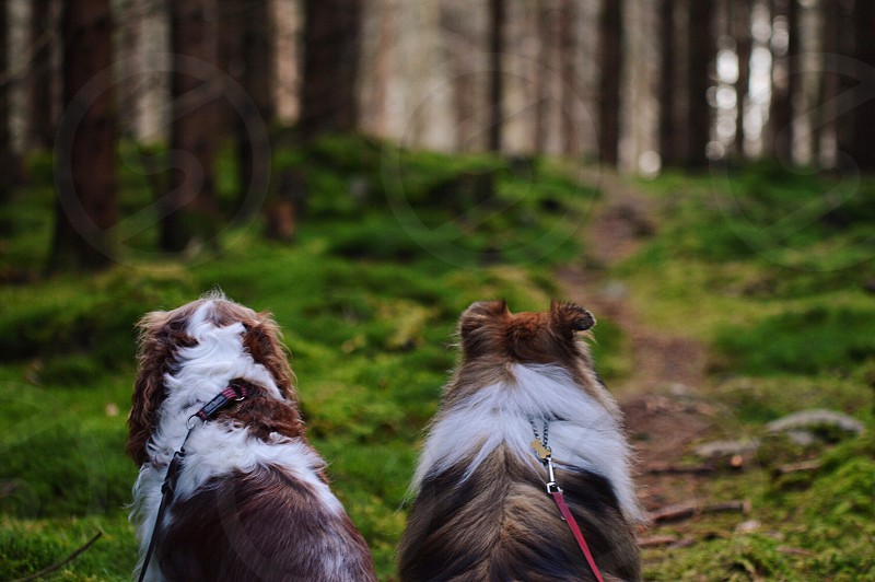 Dogs companionship brothers forest photo