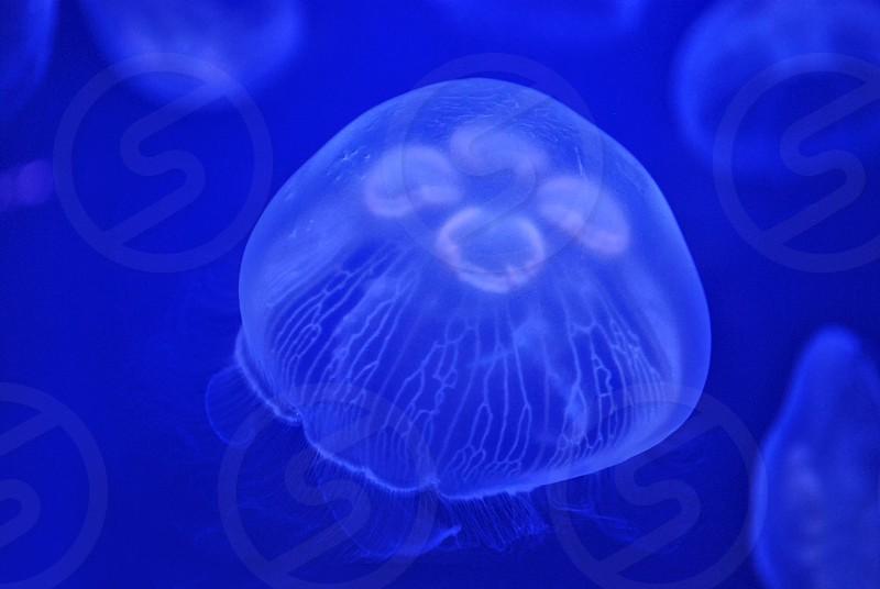 Amazing Underwater Marine Life photo