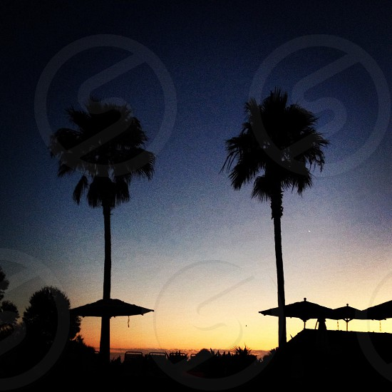 view of two coconut tree by the sunset photo