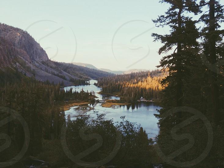 river through pine trees photo
