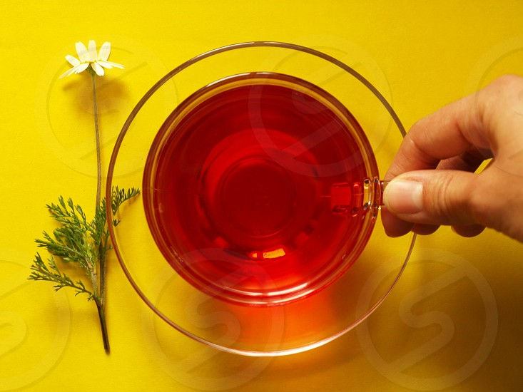 fruit tea red flower camomille yellow background hand holding photo