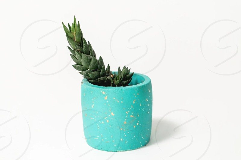 Photo of a succulent plant in a pot photo