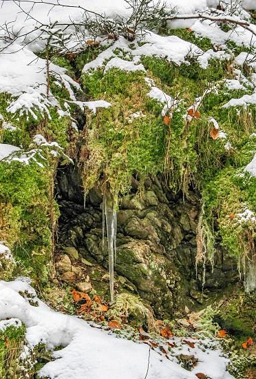 Winter scene in forest. photo