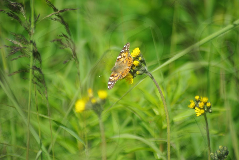 Butterfly on flowers with green background photo