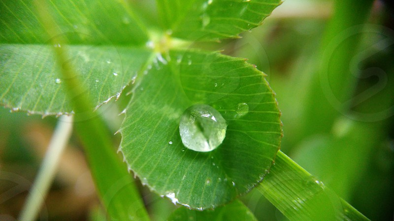 dew drop on the green leaf close-up photo
