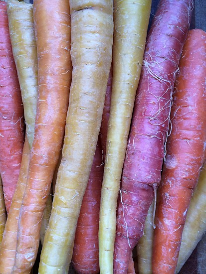 Heirloom Carrots photo