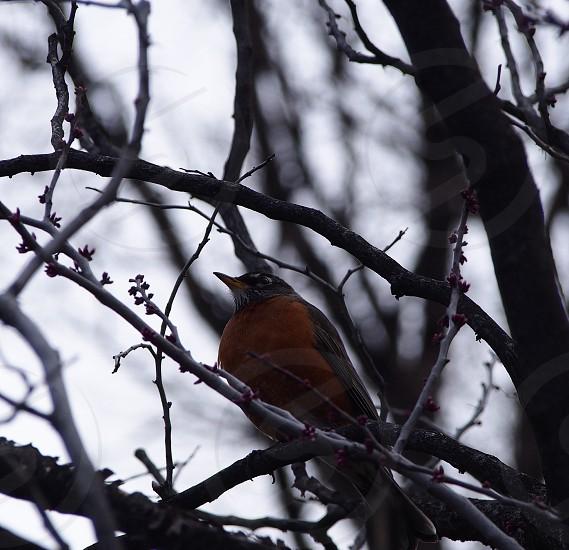 orange and brown bird photo