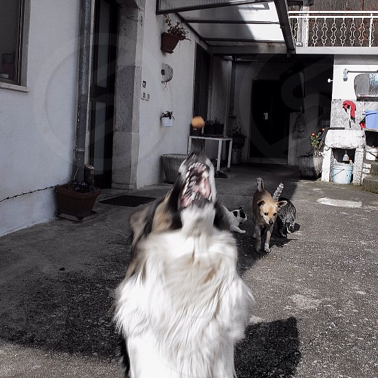 #dog #jump #mydog #happy photo